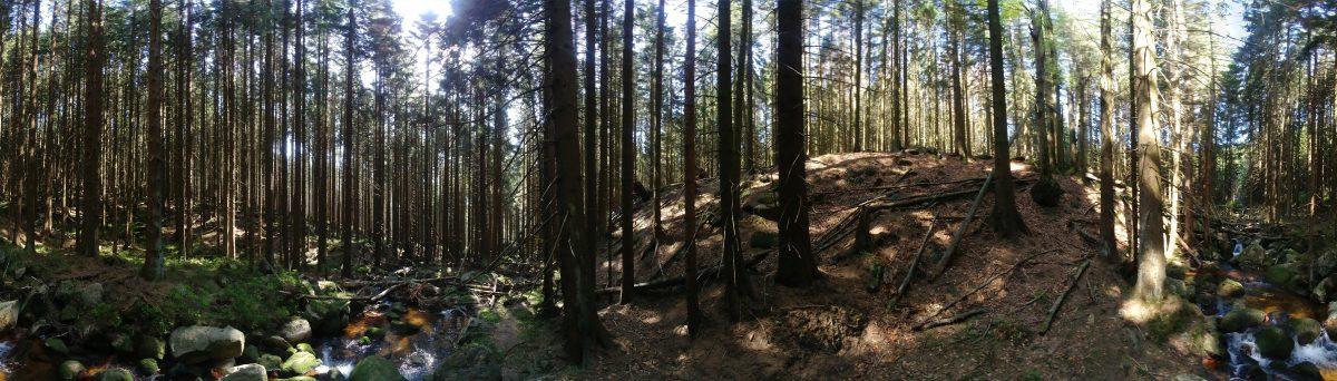 Wandern im Harz: Waldliebe