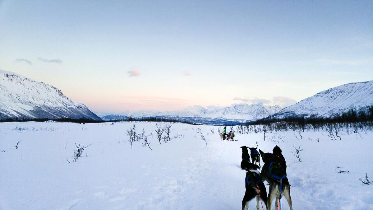 Schlittenhunde in Schneelandschaft